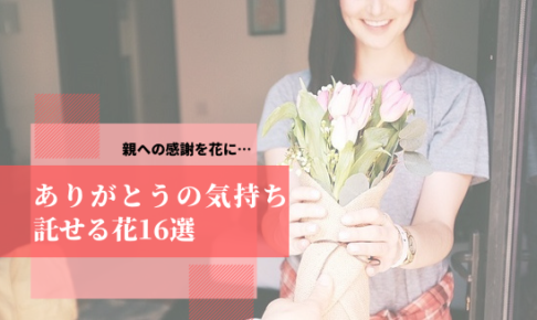 親へ花を贈るアイキャッチ