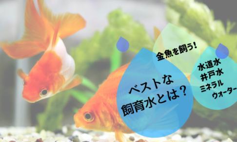 金魚飼育水アイキャッチ