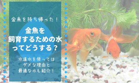 金魚の飼育水アイキャッチ